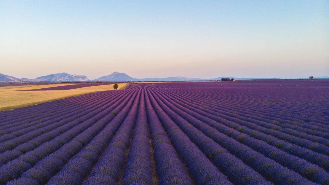 Plateau Valensole Lavende
